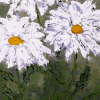 Power of Three: Daisies